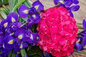 hortensia and iris flowers background