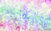 beautiful flowers with color filters
