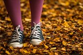 walking through autumn leaves background