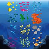 a set of colored fishes on an underwater background