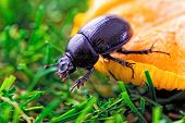 Beetle On A Green Grass And Mushroom