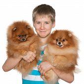 Boy Holds Two Pomeranian Spitz