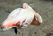 Flamingo Pink Colour