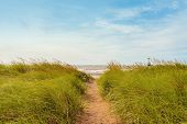 Sand Path Over Dunes With Beach Grass
