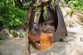 Bat Hanging Upside Down On A Branch Close Up
