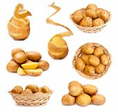 photo collage of potatoes isolated on white background