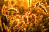 The Grass Flower