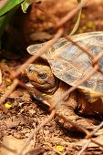 picture of tortoise  - Tortoise trapped in a cage and tortoise crawling