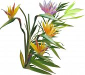 illustration with blossoming green bamboo isolated on white background
