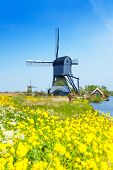 image of water-mill  - Beautiful old water pumping mill through the spring yellow flowers near Kinderdijk - JPG
