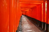 picture of inari  - Kyoto Japan  - JPG