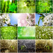 collection of spring backgrounds. Grass, flower,growing, plant, forest