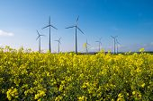 foto of wind wheel  - A rapeseed field with wind engines in the back - JPG
