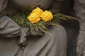 Yellow chrysanthemum at the Josefov Garrison Cemetery in Jaromer, Central Bohemia, Czech Republic.