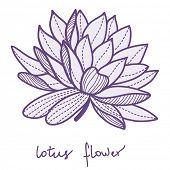 Stylish lotus flower on white background