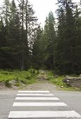 picture of zebra crossing  - Zebra crossing and the mountain path through nature in Madesimo Italy - JPG