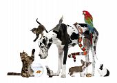 stock photo of petting  - Group of pets together in front of white background - JPG