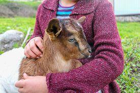 foto of baby goat  - Little girl holding the small goat - JPG