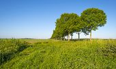 picture of row trees  - Double row of trees in sunlight along a field in spring - JPG