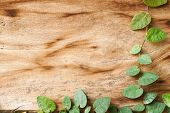 pic of creeper  - creeper plants on a wooden door background - JPG