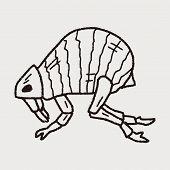 pic of lice  - Flea Doodle - JPG