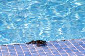 stock photo of tadpole  - Happy fun toad resting at the pool soaking up the sun - JPG