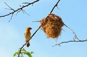 stock photo of bird-nest  - Bird and bird - JPG