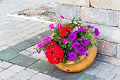 foto of petunia  - Ornamental display of colorful flowers in a tilted terracotta flowerpot standing at te edge of a building on a brick paved patio with red geraniums and purple petunias - JPG