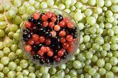 image of black-cherry  - A bowl of red and black cherries surrounded by green gooseberries - JPG