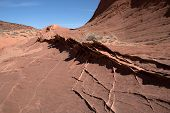picture of wilder  - Edmaiers Secret are fields of socalled Brainrocks they are located at Vermilion Cliffs Wilderness Utah USA - JPG