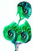 Green Sea Shell Swirle