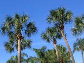 Palm Trees Agains The Sky poster