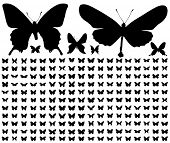 200 different silhouettes of butterflies.