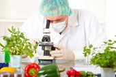 foto of genetic engineering  - Researcher with microscope with a GMO vegetables - JPG
