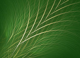 foto of fescue  - fractal rendering resembling blades of grass or fescue - JPG