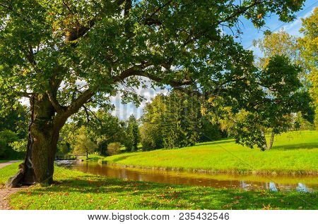 poster of Autumn Landscape Of September Park Autumn Nature. Yellowed Deciduous Autumn Tree At The Bank Of The