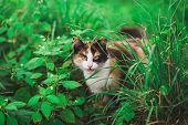 Closeup Portrait Of Face Of Beautiful Young Angry Looking Cat Hiding Among Fresh Green Grass. Cat Wi poster