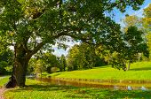 Autumn Landscape Of September Park Autumn Nature. Yellowed Deciduous Autumn Tree At The Bank Of The  poster