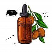 Argan Essential Oil Bottle Hand Drawn Vector Illustration. Isolated Plant Drawing For Aromatherapy T poster