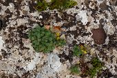 Grey Stone Covered By Lichen. Natural Textured Background. Grey Rock With Cracks And Colorful Spots  poster