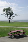 Picnic table and tree