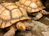 Tortoise Mates