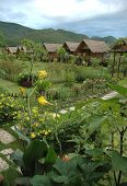 Flower Village In Thailand