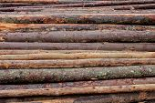 Wooden Logs Of Pine Woods In The Forest, Stacked In A Pile. Freshly Chopped Tree Logs Stacked Up On  poster
