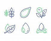 Leaf, Leaves And Pumpkin Seed Line Icons Set. Leaf Dew, Gluten Free And Water Splash Signs. Nature L poster