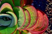 Beautiful Interesting Original Natural Background With Green-red Leaves In Close-up poster