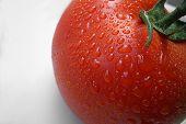 Fresh Tomato Close Up