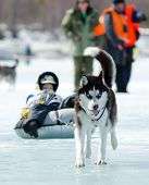 Mushing At Baikal Fishing 2012