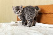 Cute Tabby Scared Kitten Standing On White Plaid At Home. Newborn Kitten, Baby Cat, Kid Animal And C poster