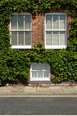 Ivy Windows.